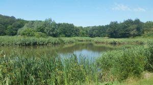 lake iasi botanical gardens